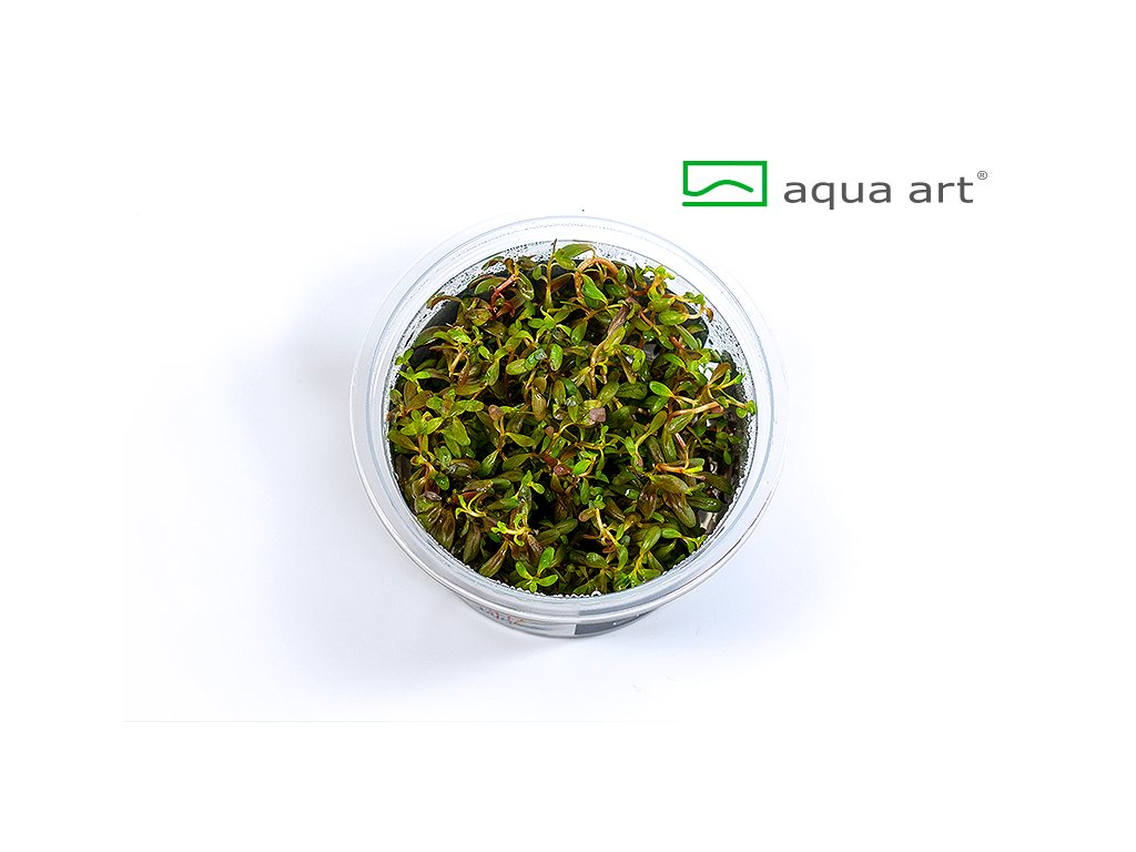 Rotala sp.'Pearl' open