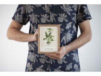 Tropica 13x18 cm Echinodorus Ozelot Green
