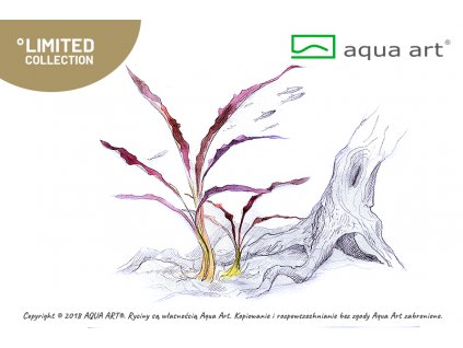 3000 cryptocoryne spiralis red Aqua Art