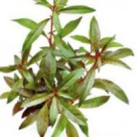 Stonkové rostliny