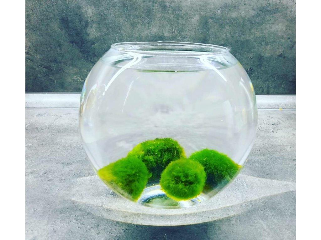 Skleněná akvarijní koule 0,8 l