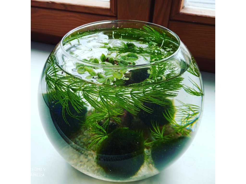 Skleněná akvarijní koule 4 l set