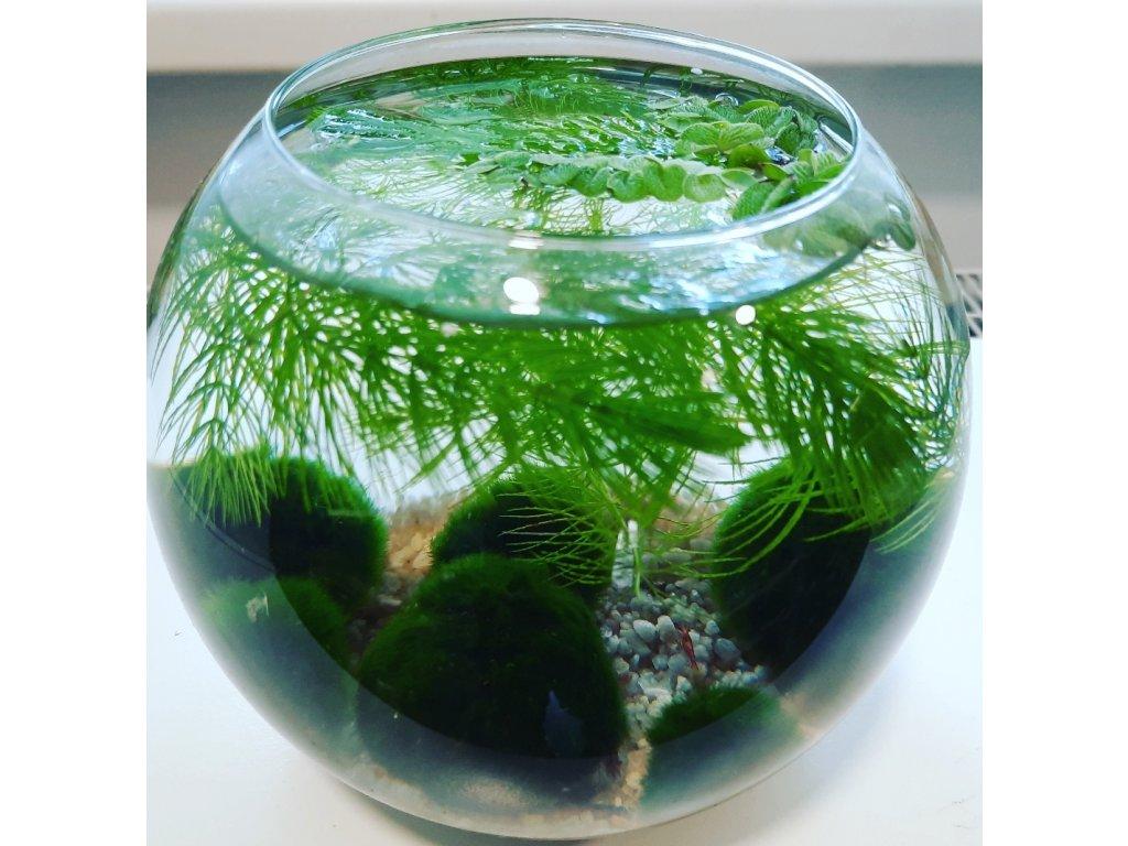Skleněná akvarijní koule 2,5 l set