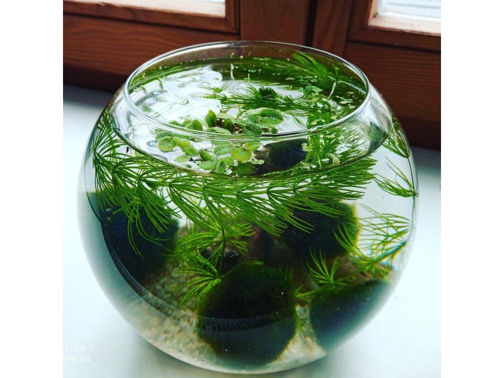 Skleněná akvarijní koule 0,8 l set