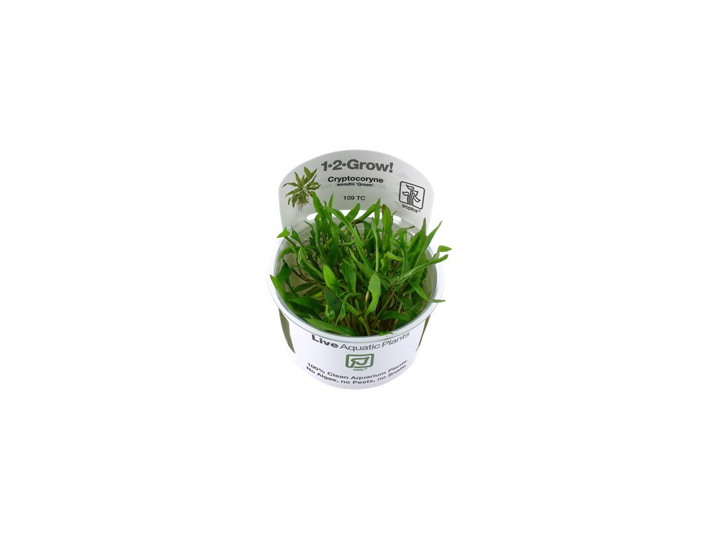 Tropica Cryptocoryne wendtii 'Green' 1-2-Grow!