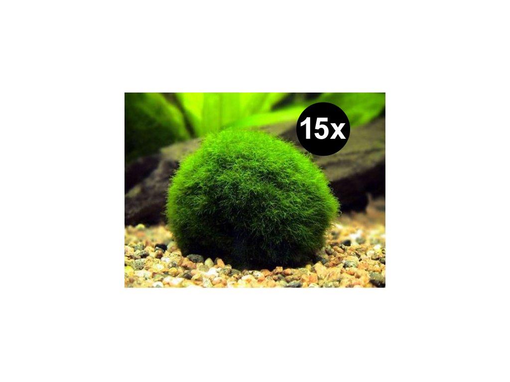 15 řasokoulí - MIX 2-4cm