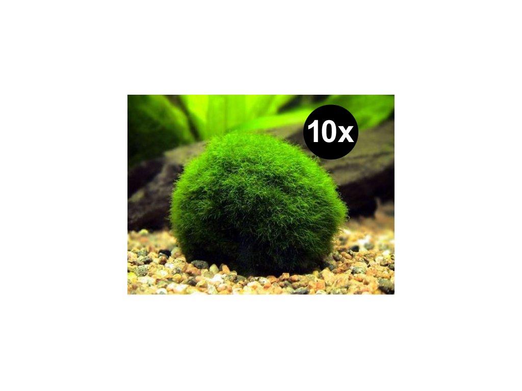 10 řasokoulí - MIX 2-4cm