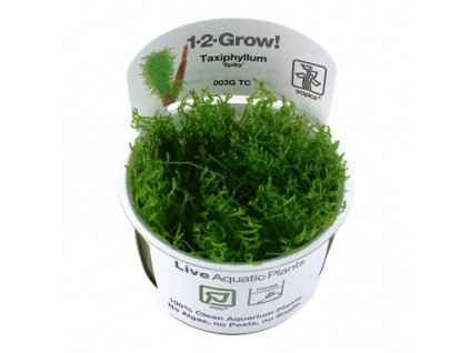Tropica Taxiphyllum 'Spiky' 1-2-Grow!