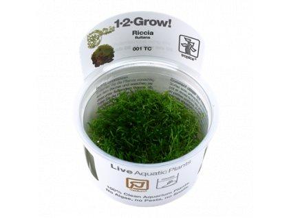 Tropica Riccia fluitans 1-2-Grow!
