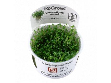 Tropica Glossostigma elatinoides 1-2-Grow!