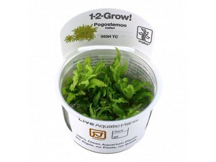 Tropica Pogostemon helferi 1-2-Grow!