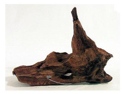 Kořen velikost 15 - 23 cm S