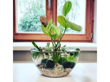 Váza Neli 1l - řasokoule a vodní rostliny