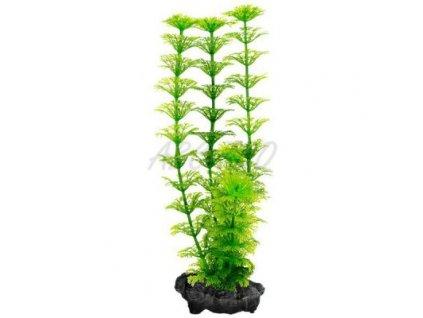 Rostlina Tetra Ambulia, S – 15 cm