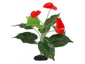 34157 rostlina repti planet kvetouci anthurium 40 cm 1ks