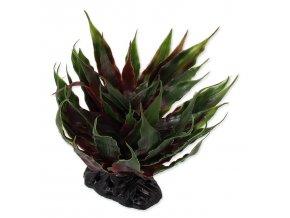 34160 rostlina repti planet sukulent agave zelena 18 cm 1ks