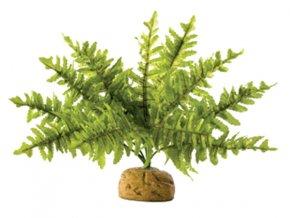 Rostlina EXO TERRA Boston Fern malý 17 cm