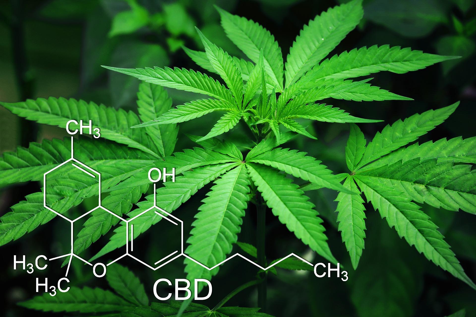 Meddig mutatható ki a drog a szervezetünkben?