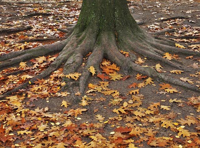 american-oak-1808640_640