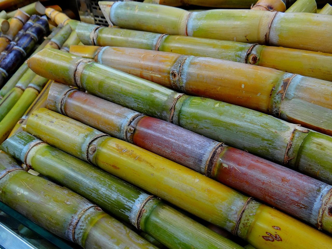 sugar-cane-276242_1280