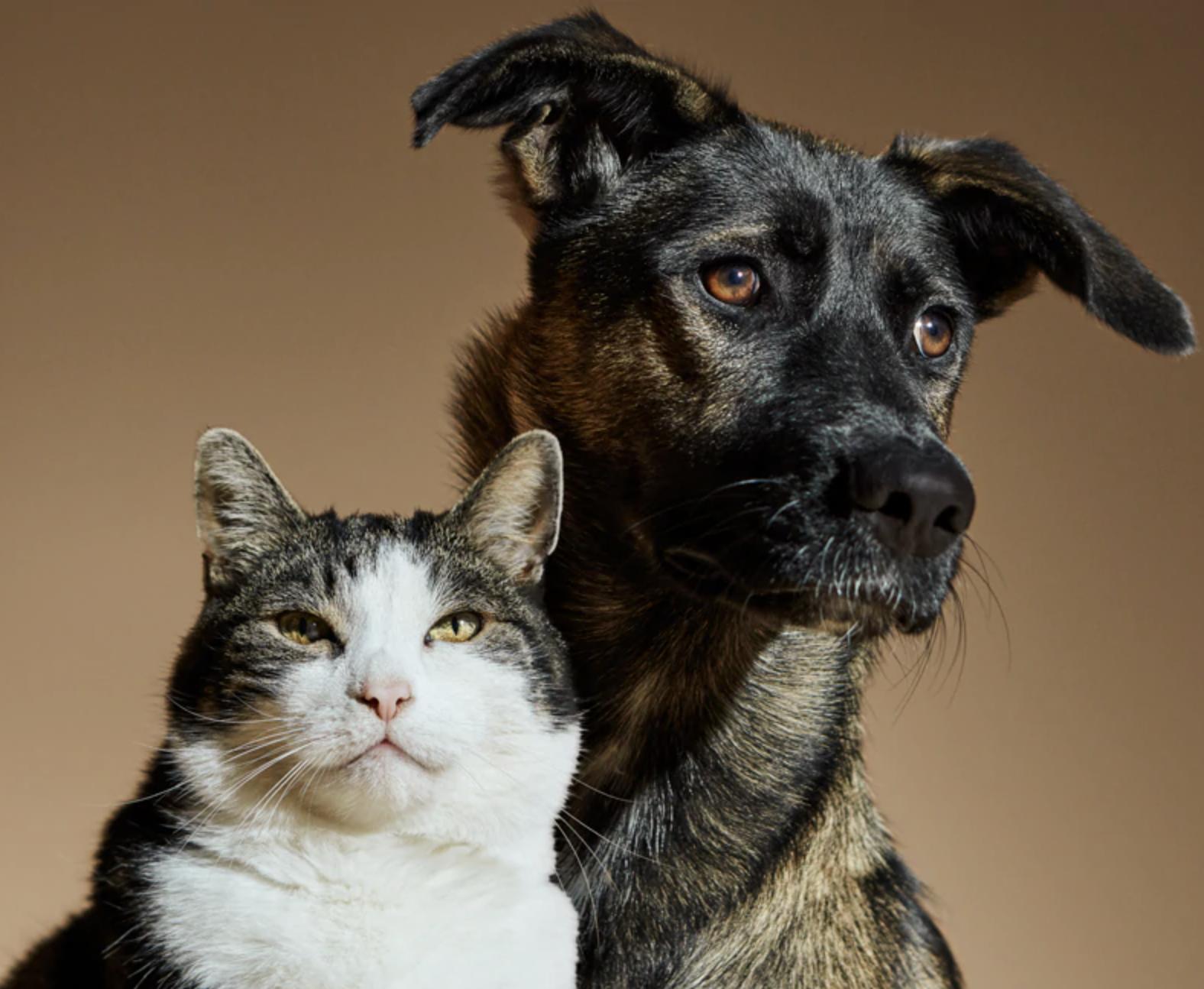 Companion Animal For Life - projekt nadácie Capellino