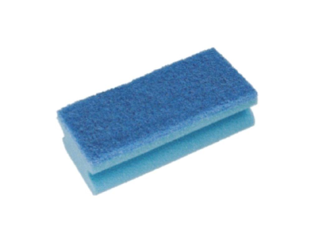 houba velká modrá