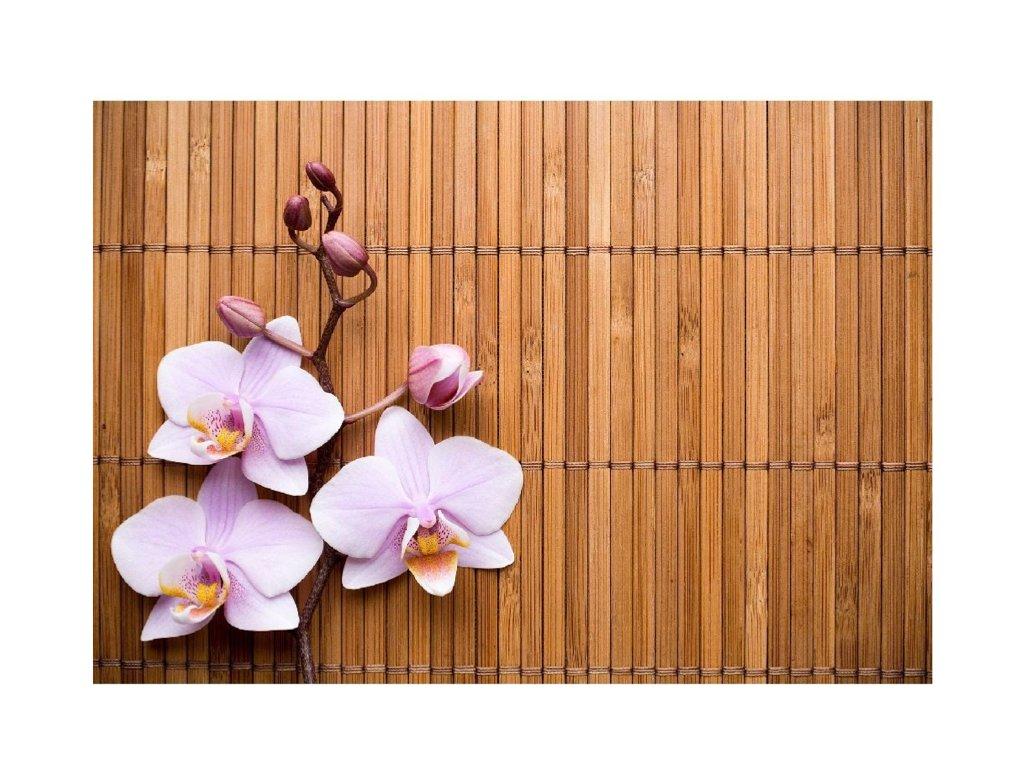 předložka orchidej a