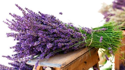 O Provence a levanduli