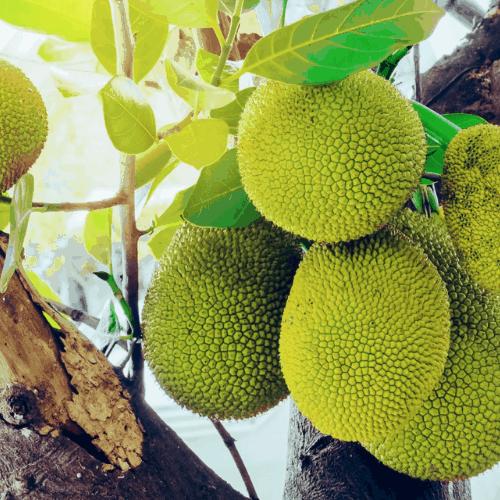 Mariovaný jackfruit - Tender Jack