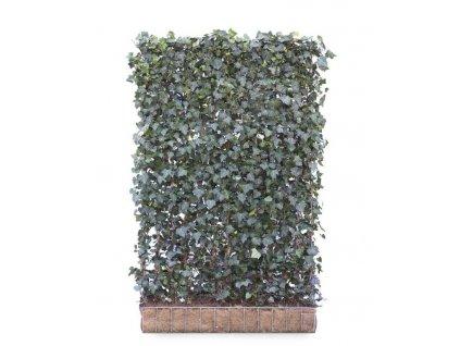 Mobilane GreenScreen Hedera helix Woerner 120x180 LR