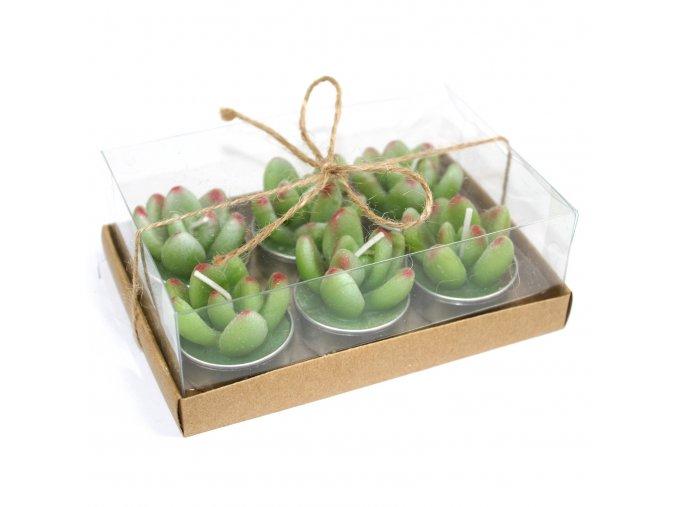 Dekorativní čajové svíčky Sukulent kaktus, set 6 ks