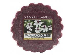 Yankee Candle Vonný vosk Orchidej z Madagaskaru (Madagascan Orchid), 22 g