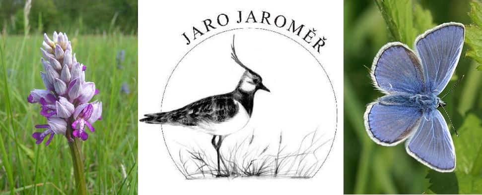 kompozice-Jaro-Jaroměř