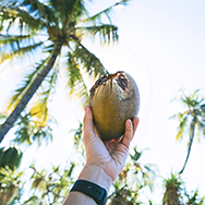 Kokosový+olej.jpg