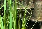 Zelené rostliny / Trávy