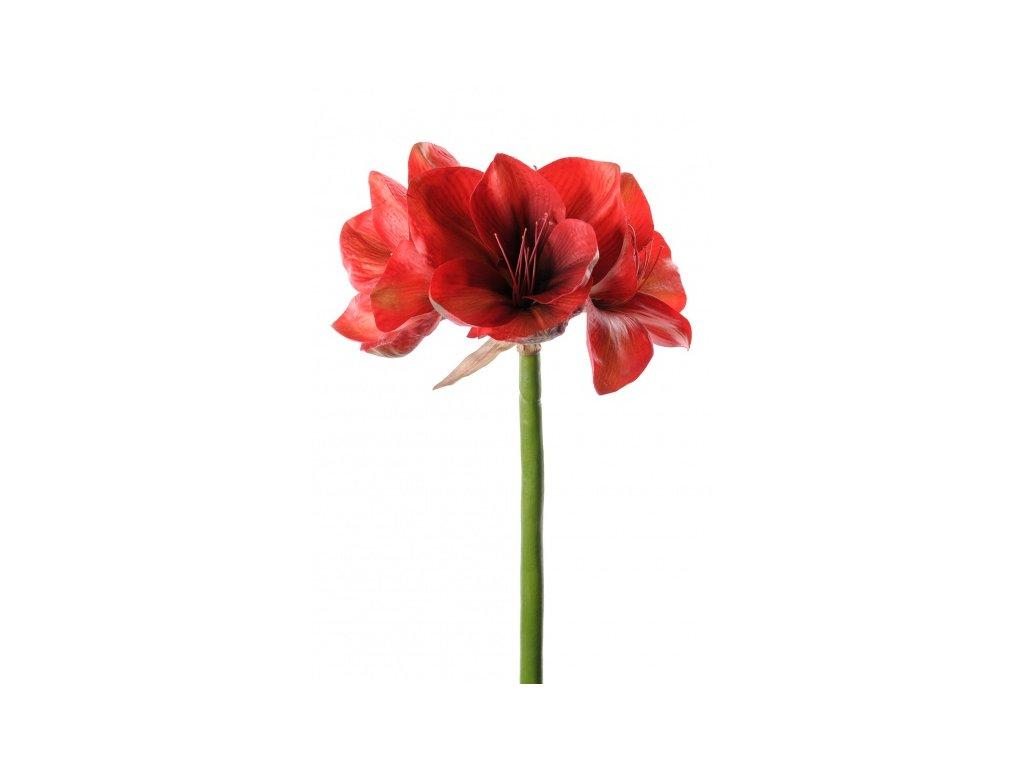 Umělá květina - Amaryllis červený