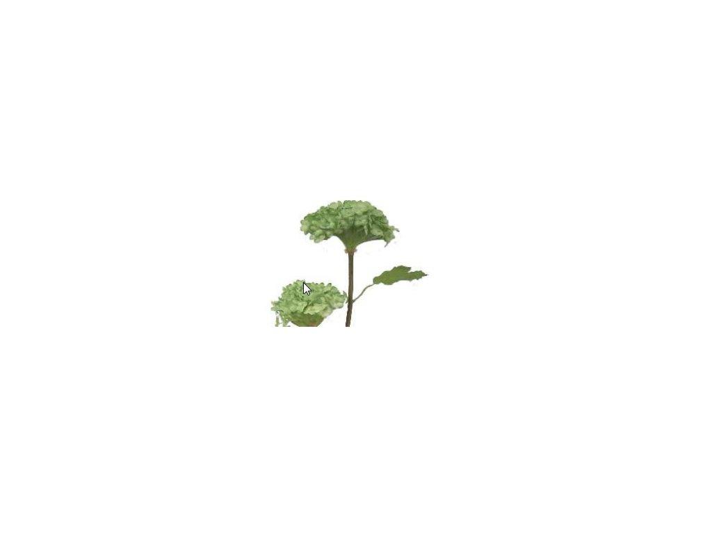 Hortenzie malá zelená