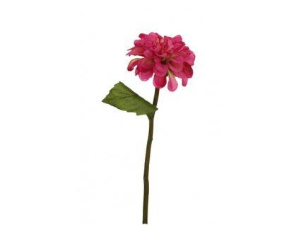 Jiřina malá růžová
