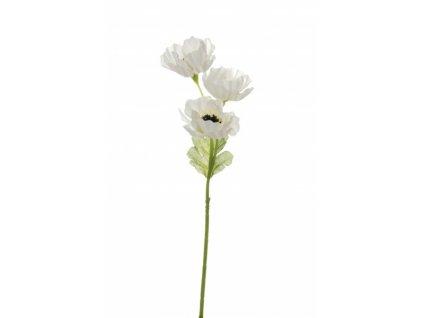 Sasanka malá bílá CR