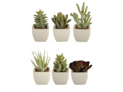 Umělá květina - Kaktus