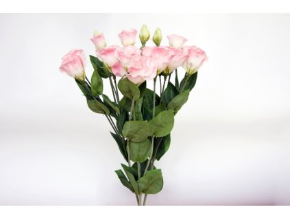 Lisianthus růžový