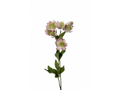 Umělá květina - Jarmanka