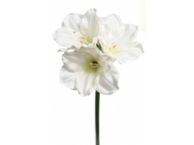 umela-kvetina-amarylis-bily