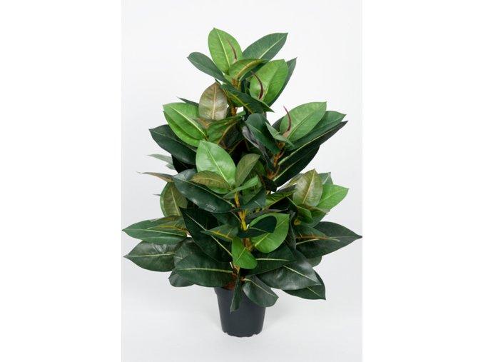 umela-rostlina-fikus