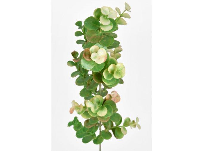 Umělá květina - Eukalyptus s bílou špičkou
