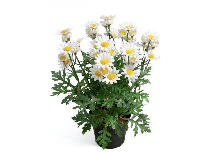 umela-rostlina-kopretina-kerik-30cm