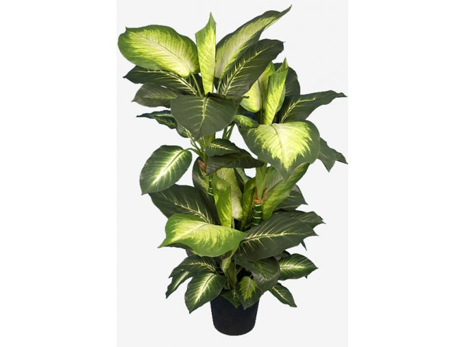umela-rostlina-difenbachie