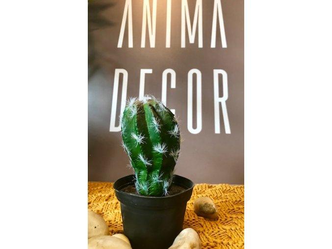 umela-rostlina-kaktus-v-kvetinaci-kulovity--15-cm
