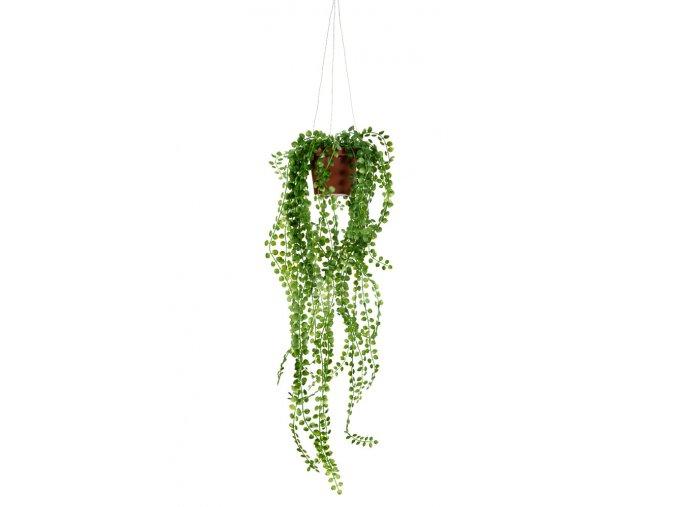 umela-rostlina-pilea-previsla-rostlinka-v-kvetinaci