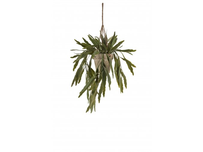 umela-rostlina-rhipsalis-previsla-rostlinka-v-kvetinaci